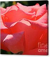 Pink Touch Of Class Petals Canvas Print
