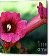 Pink Trumpets Canvas Print