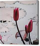 Pink Water Lily Buds Canvas Print