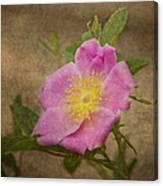Pink Wild Rose Canvas Print