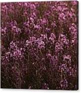 Pink Wildflowers Canvas Print