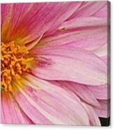 Pinks The One Canvas Print