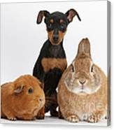 Pinscher Puppy With Rabbit And Guinea Canvas Print