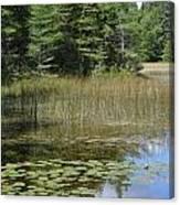 Pintail Pond4 Canvas Print