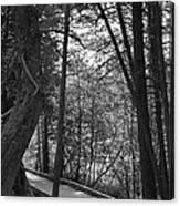 Pintail Trail2 Canvas Print