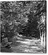 Pintail Trail3 Canvas Print