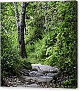 Pisgah Path Canvas Print