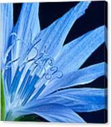 Pistil's Of Chicory Canvas Print