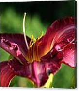 Pistons Of The Pink Yellow Lily Canvas Print