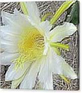 Pitaya Flower Canvas Print