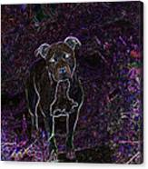 Pitty In Purple  Canvas Print