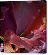 Placenta Canvas Print