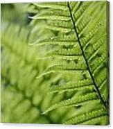 Plant Detail, Close Up Canvas Print