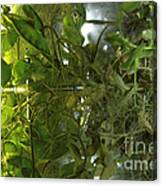 Plant Growth Experiment, Iss Canvas Print