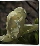 Plant Sciences Canvas Print