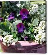 Planter Of Purple Pansies And White Alyssum Canvas Print