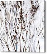 Plants In Winter Canvas Print