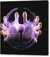 Plasma Sphere Canvas Print
