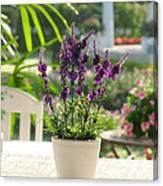 Plastic Lavender Flowers  Canvas Print