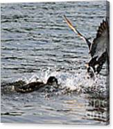 Playing Chase Canvas Print