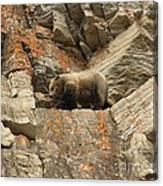 Playing Mountain Goat Canvas Print