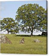 Pleasant Hillside Canvas Print