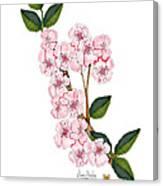 Plum Beautiful Canvas Print