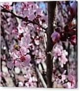 Plum Blossoms 6 Canvas Print