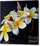 Plumeria Bouquet Canvas Print
