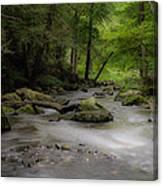 Pocantico River In The Rain Canvas Print