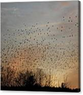 Poetic Swarms Canvas Print