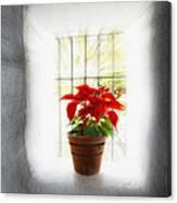 Poinsettia In Window Light Canvas Print