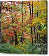 Point Beach State Forest Canvas Print