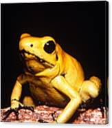 Poison Dart Frog Canvas Print