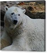 Polar Bear 1 Canvas Print