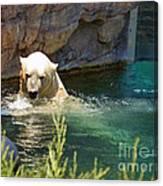 Polar Bear Swim Canvas Print
