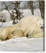 Polar Bear With Cub In Snow Canvas Print