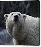 Polar Bear With Waterfall Canvas Print