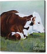 Polled Hereford Baby Canvas Print