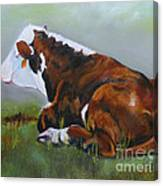 Polled Herford Baby 2 Canvas Print