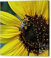 Pollen Laden  Canvas Print