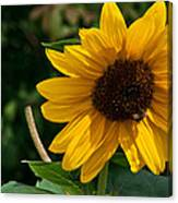 Pollinating In Camouflage Canvas Print