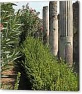 Pompeii Columns 2 Canvas Print