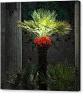 Pompeii Palm Tree Italy Canvas Print