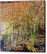 Pond And Rushes Canvas Print