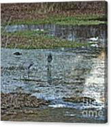 Pond Birds At Sunset Canvas Print