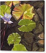 Pond Flower Canvas Print