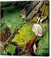 Pond Lumens Canvas Print