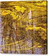 Pond Scum Three Canvas Print
