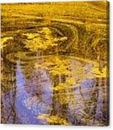 Pond Scum Two Canvas Print